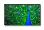 NEC launches new 65in C651Q and V654Q Professional UHD Displays